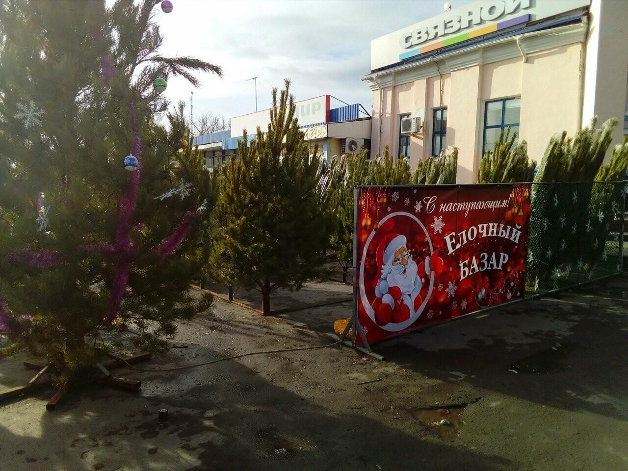 В Новошахтинске стартовала продажа хвойных деревьев, фото-1
