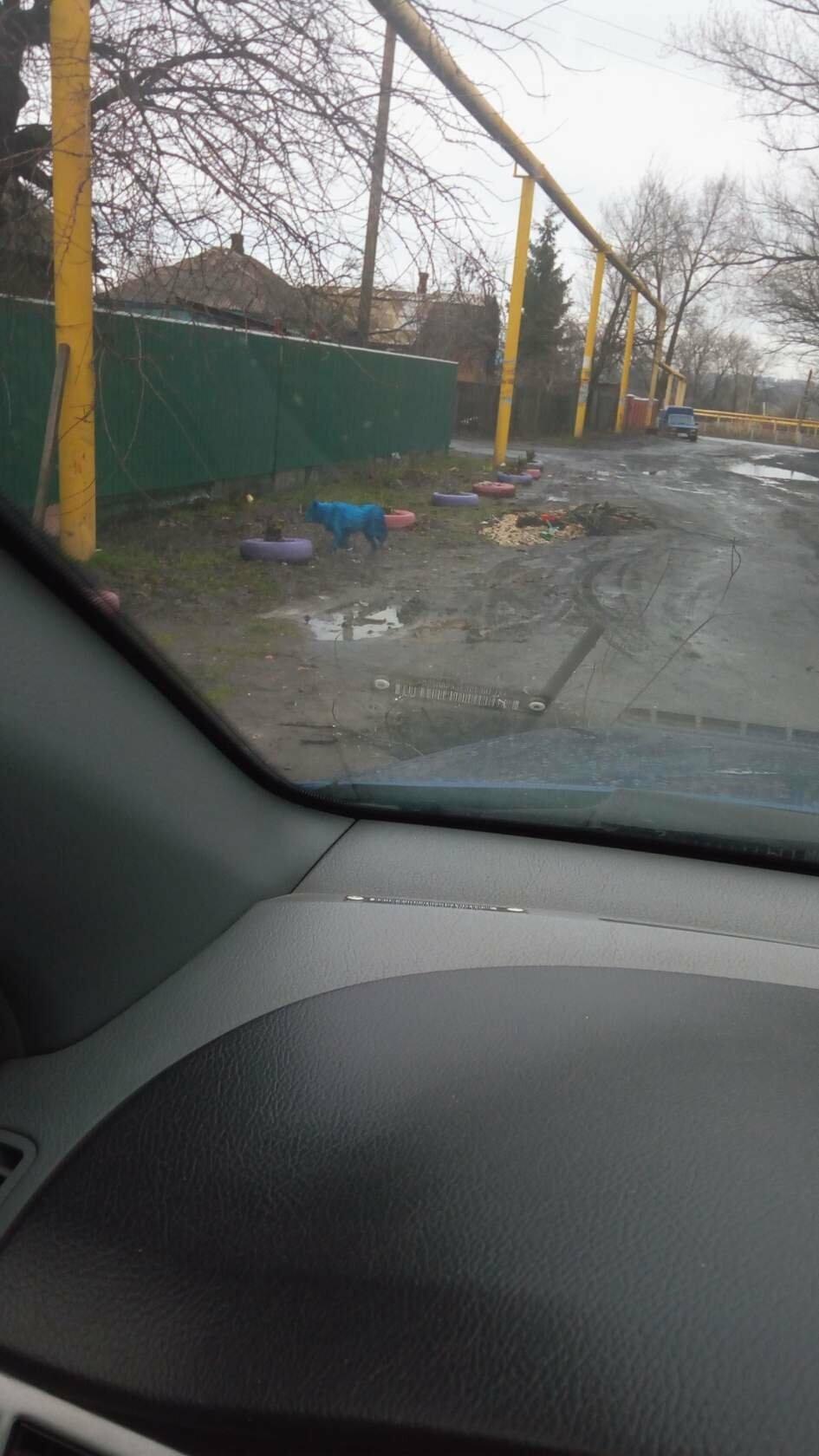 В Новошахтинске хулиганы облили краской собаку, фото-1
