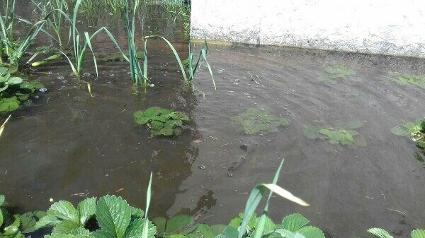 """Благодаря """"Донреко"""" двор жительницы Новошахтинска превратился в пруд, где живут лягушки, фото-3"""