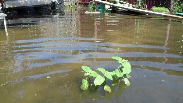 """Благодаря """"Донреко"""" двор жительницы Новошахтинска превратился в пруд, где живут лягушки, фото-4"""