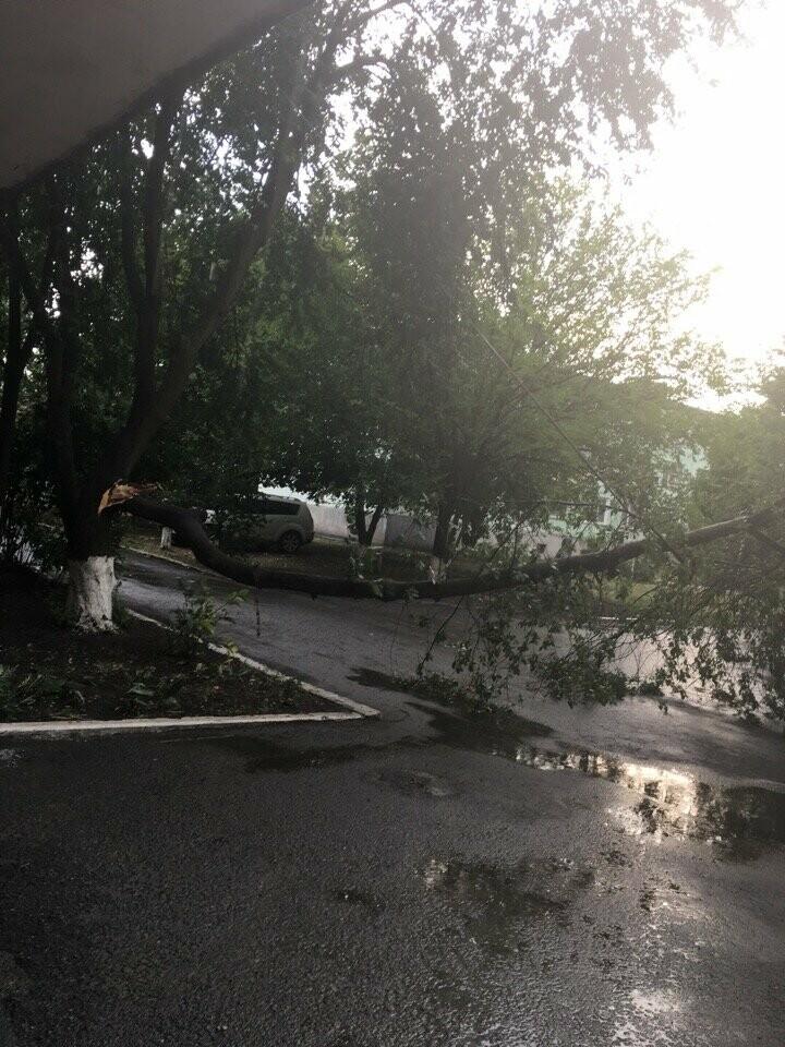 Упавшее дерево в центре Новошахтинска придавило сразу три автомобиля, фото-2