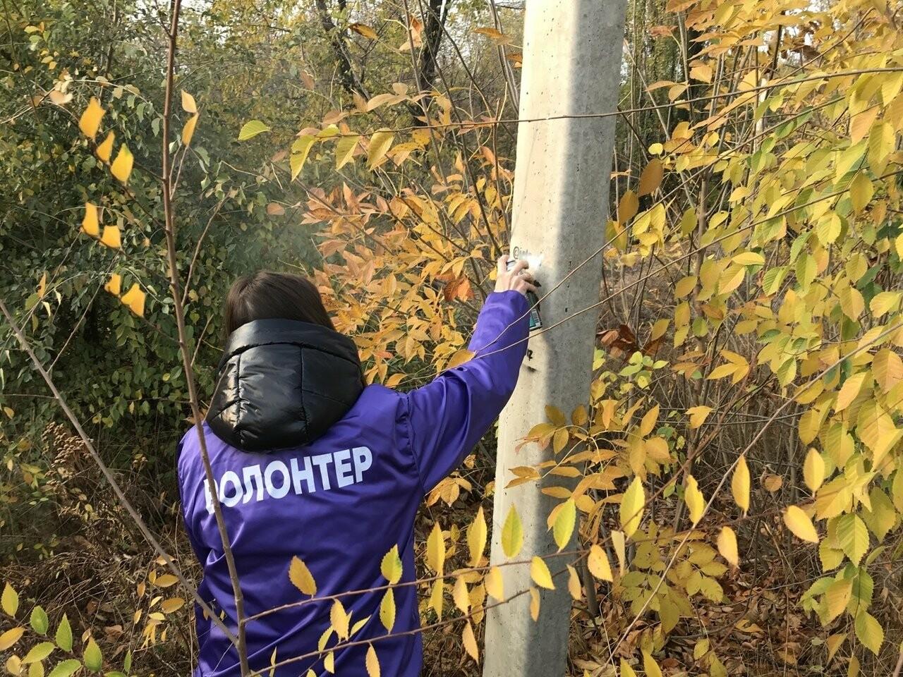 Новошахтинские волонтеры уничтожали рекламу наркотических веществ, фото-2